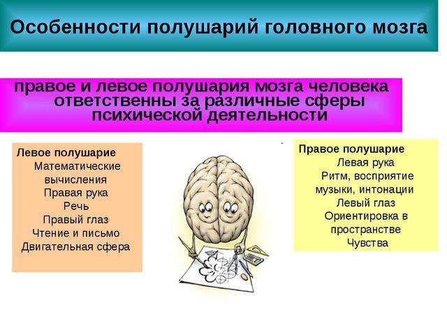 Особенности полушарий головного мозга правое и левое полушария мозга человека...