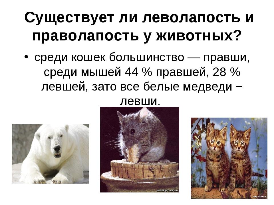 Существует ли леволапость и праволапость у животных? среди кошек большинство...