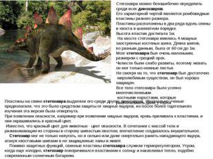 Стегозавра можно безошибочно определить среди всехдинозавров. Его характерно