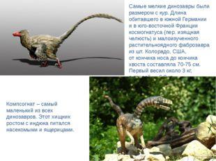 Самые мелкие динозавры были размером скур. Длина обитавшего вюжной Германии