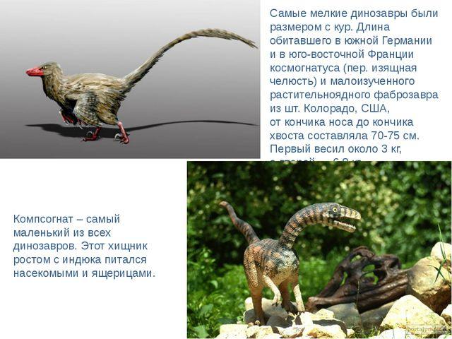 Самые мелкие динозавры были размером скур. Длина обитавшего вюжной Германии...