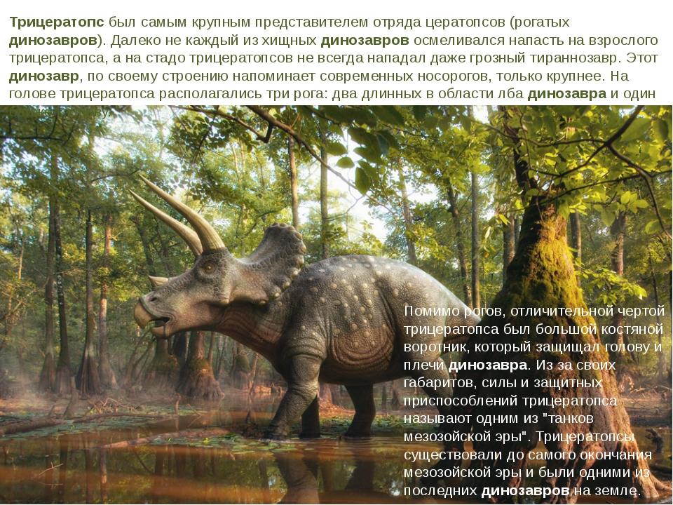 Трицератопсбыл самым крупным представителем отряда цератопсов (рогатых диноз...