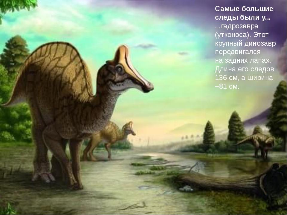 Самые большие следы былиу... ...гадрозавра (утконоса). Этот крупный динозавр...