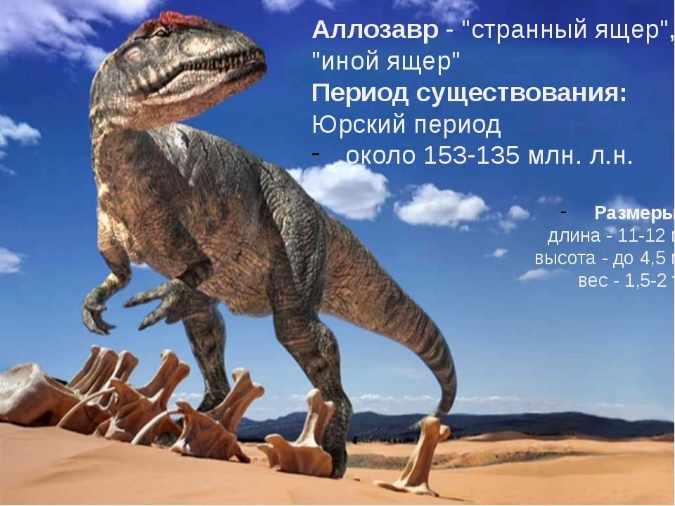 """Аллозавр- """"странный ящер"""", """"иной ящер"""" Период существования: Юрский период..."""