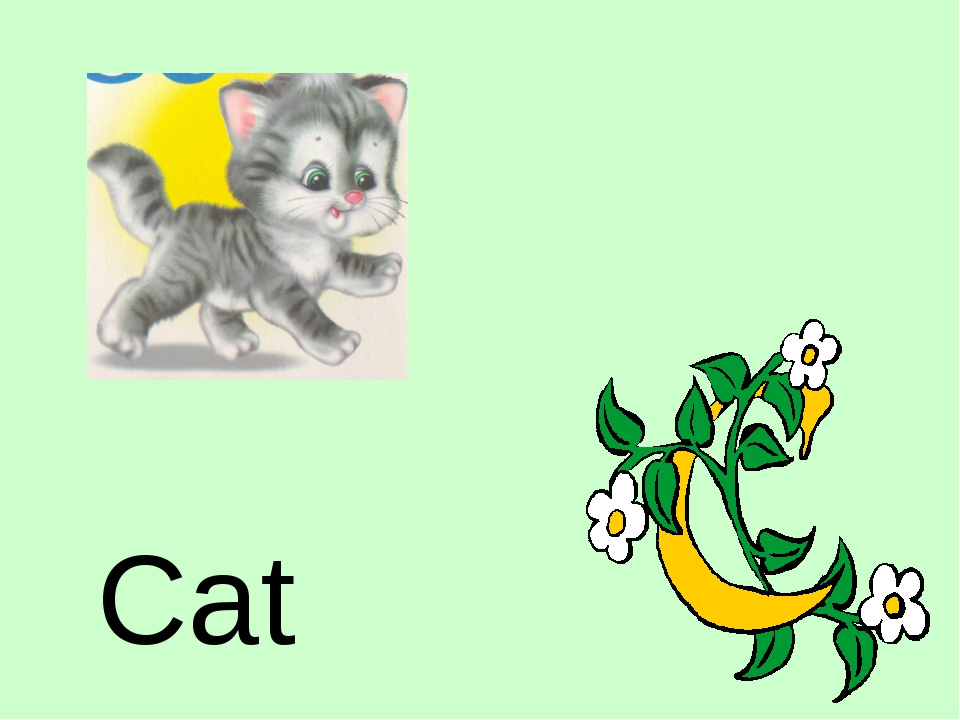 Cat http://urazimbetov.jimdo.com/
