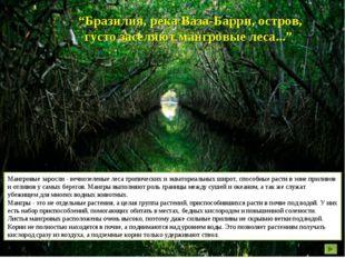 """""""Бразилия, река Ваза-Барри, остров, густо заселяют мангровые леса..."""" Мангров"""
