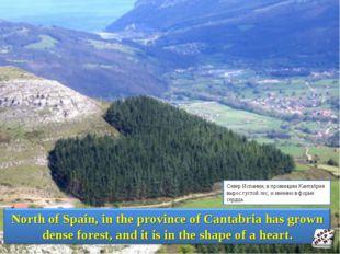 Север Испании, в провинции Кантабрия вырос густой лес, и именно в форме сердца.