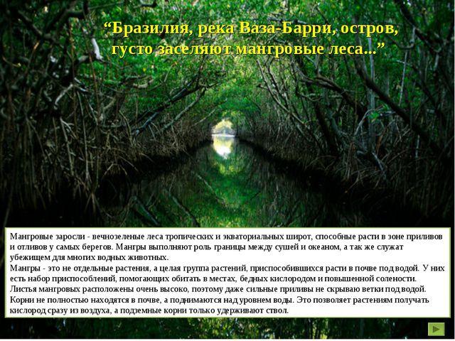 """""""Бразилия, река Ваза-Барри, остров, густо заселяют мангровые леса..."""" Мангров..."""