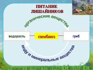 водоросль гриб ПИТАНИЕ ЛИШАЙНИКОВ симбиоз