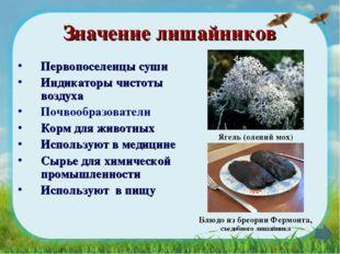 Значение лишайников Первопоселенцы суши Индикаторы чистоты воздуха Почвообраз