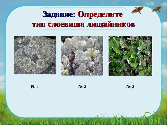 Задание: Определите тип слоевища лищайников  № 1 № 2  № 3