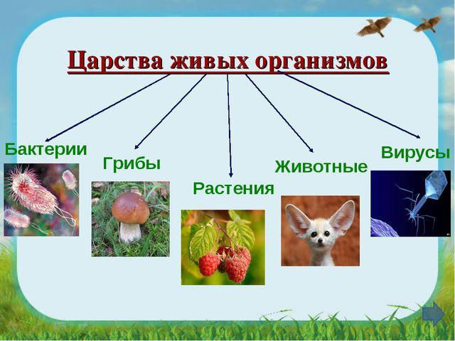 Царства живых организмов Грибы Бактерии Растения Животные Вирусы