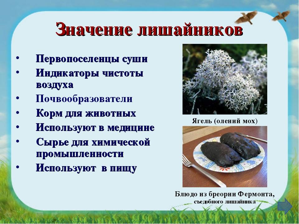 Значение лишайников Первопоселенцы суши Индикаторы чистоты воздуха Почвообраз...