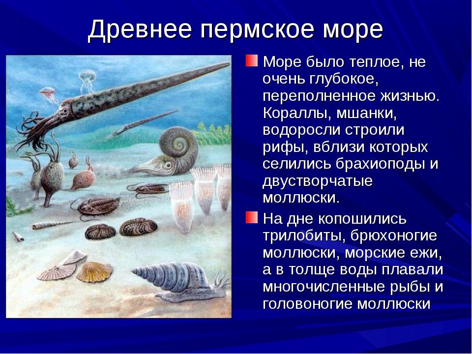 Древнее пермское море Море было теплое, не очень глубокое, переполненное жизн...