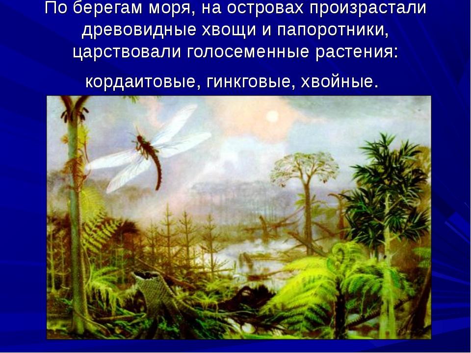 По берегам моря, на островах произрастали древовидные хвощи и папоротники, ца...