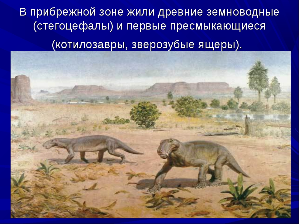 В прибрежной зоне жили древние земноводные (стегоцефалы) и первые пресмыкающи...