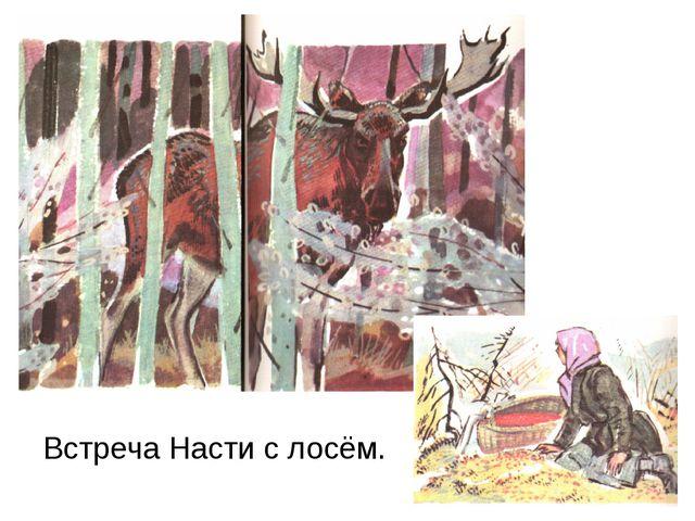 Встреча Насти с лосём.