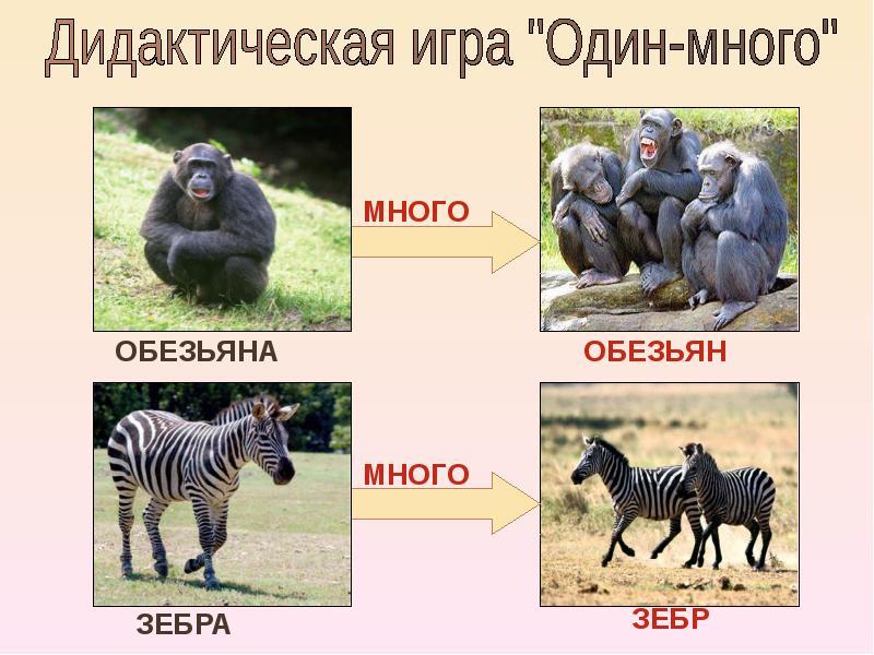 http://mypresentation.ru/documents/b854f2bf008249c38b91d97ec4c59b84/img6.jpg