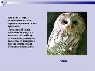 Крупная птица, с большими глазами, серым оперением, клюв крючком. Бесшумный