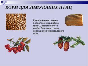 КОРМ ДЛЯ ЗИМУЮЩИХ ПТИЦ Раздавленные семена подсолнечника, арбуза, тыквы, крош