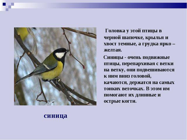 Головка у этой птицы в черной шапочке, крылья и хвост темные, а грудка ярко...