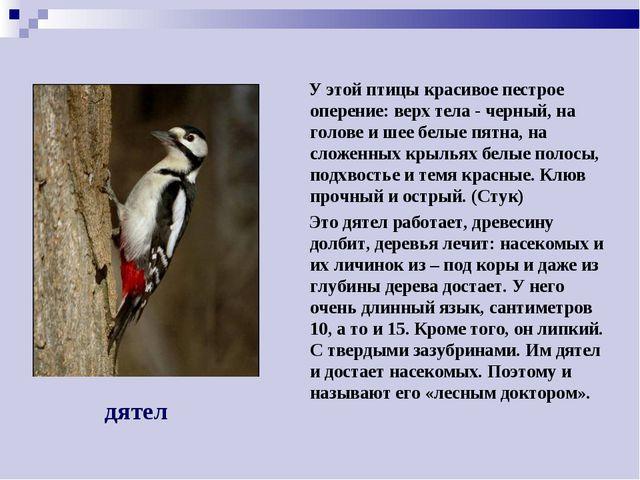У этой птицы красивое пестрое оперение: верх тела - черный, на голове и шее...