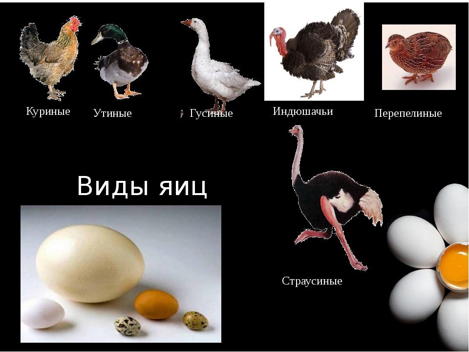 Куриные Утиные Гусиные Индюшачьи Перепелиные Виды яиц Страусиные