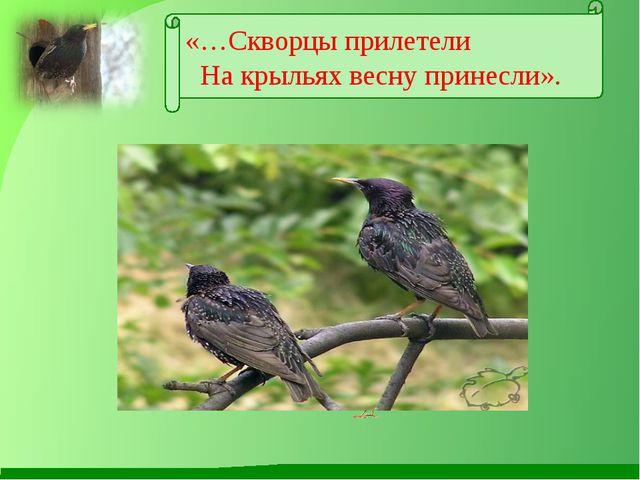 «…Скворцы прилетели На крыльях весну принесли».