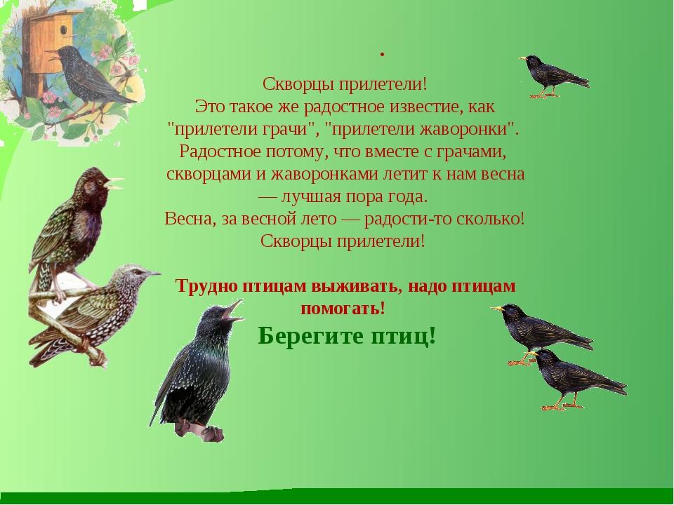 """. Скворцы прилетели! Это такое же радостное известие, как """"прилетели грачи"""",..."""