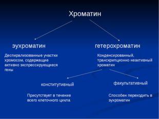 Хроматин эухроматин гетерохроматин Деспирализованные участки хромосом, содер