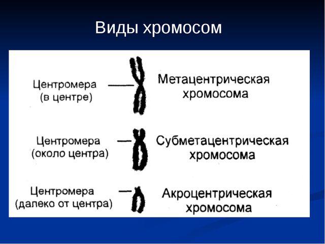 Виды хромосом
