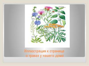 Иллюстрация к странице о травах у нашего дома