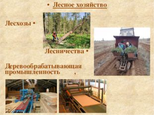 Лесное хозяйство Лесхозы ⇨ Лесничества ⇨ Деревообрабатывающая промышленность ⇩