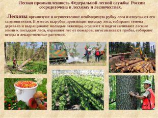 Лесная промышленность Федеральной лесной службы России сосредоточена в лесхо