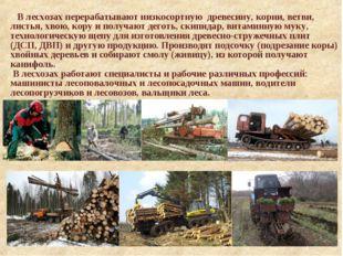 В лесхозах перерабатывают низкосортную древесину, корни, ветви, листья, хвою