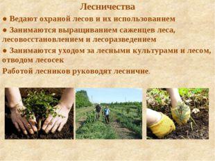 Лесничества ● Ведают охраной лесов и их использованием ● Занимаются выращиван