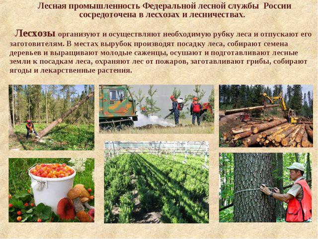 Лесная промышленность Федеральной лесной службы России сосредоточена в лесхо...