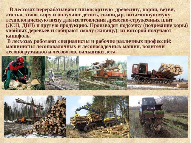 В лесхозах перерабатывают низкосортную древесину, корни, ветви, листья, хвою...