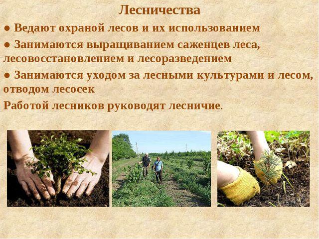 Лесничества ● Ведают охраной лесов и их использованием ● Занимаются выращиван...