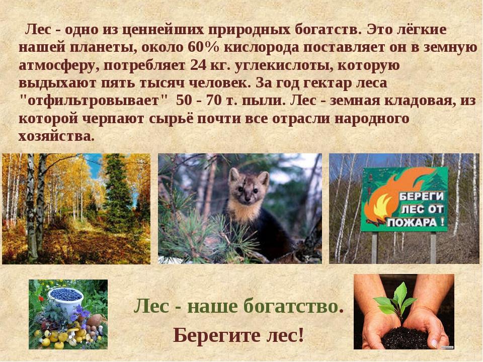 Лес - одно из ценнейших природных богатств. Это лёгкие нашей планеты, около...