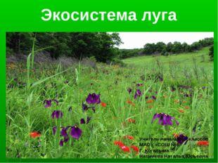 Экосистема луга Учитель начальных классов МАОУ «СОШ №6» Г. Когалыма Назмиева