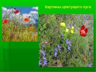 Картины цветущего луга