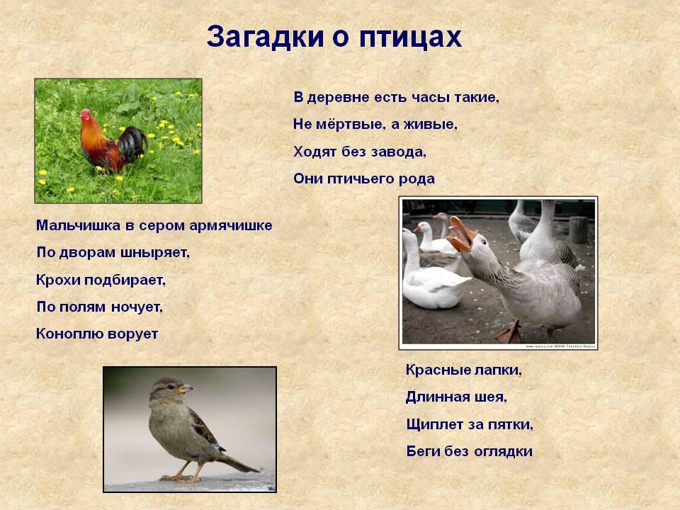C:\Users\User\Desktop\0005-005-Zagadki-o-ptitsakh.jpg