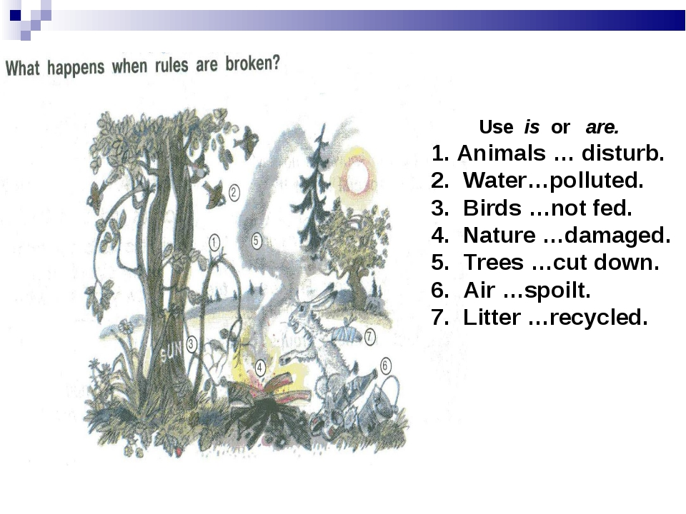 Use is or are. Animals … disturb. Water…polluted. Birds …not fed. Nature …da...