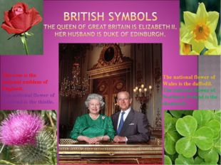 The rose is the national emblem of England. The national flower of Scotland