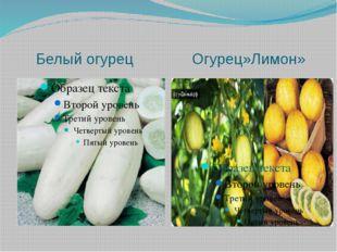 Белый огурец Огурец»Лимон»