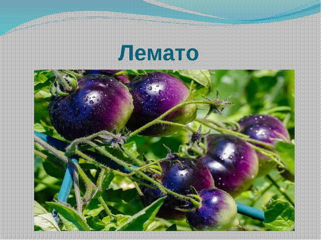 Лемато