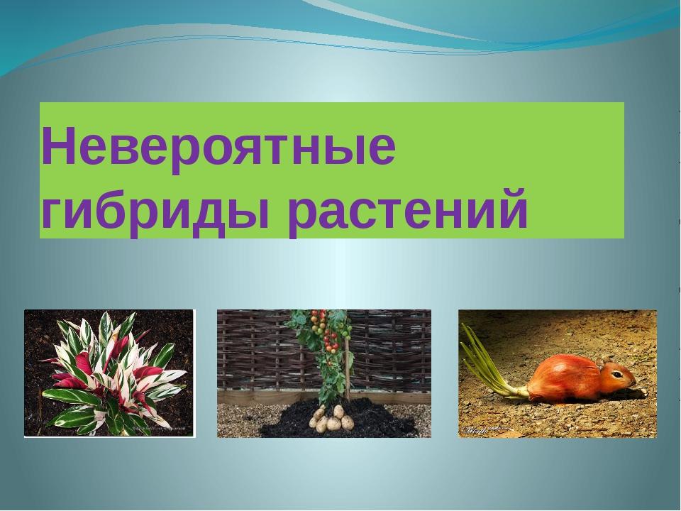 Невероятные гибриды растений