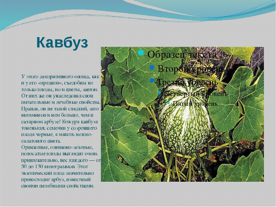 Кавбуз У этого декоративного овоща, как и у его «предков», съедобны не только...