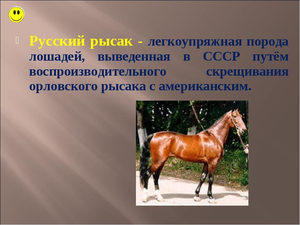 Русский рысак - легкоупряжная порода лошадей, выведенная в СССР путём воспрои...